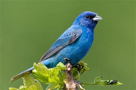 type of hawks in tn ten most beautiful species of birds in tennessee