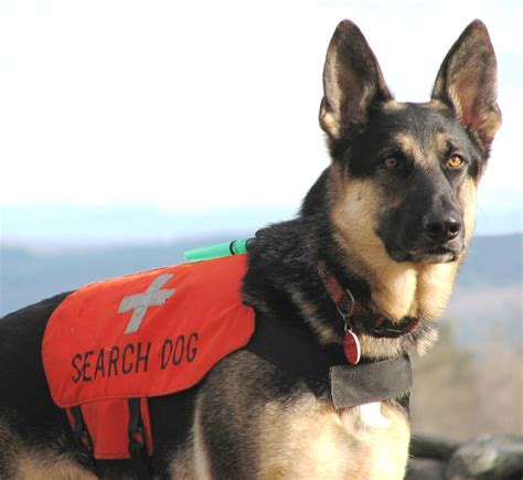 search dogs dogs rescue dogs and search rescue heroes hairstyles
