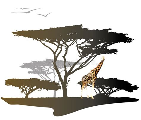 trees silhouettes stock illustration image of color 43384093 giraffe with silhouette of tree stock illustration image 48174598