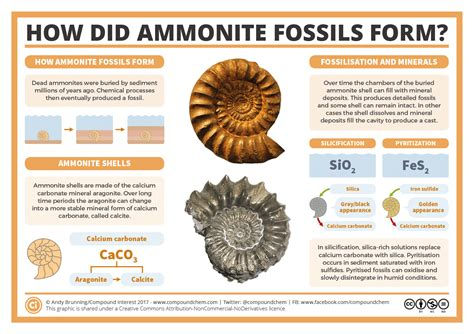 fill in the flowchart to explain how fossils are formed fill in the flowchart to explain how fossils are formed