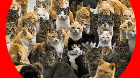 cat island cats rule cats everywhere cats cats and more cats youtube