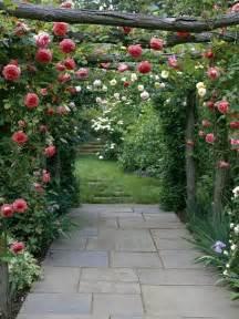Beautiful Climbing Plants - types of fragrant climbing plants gardens climbing flowers and wooden trellis