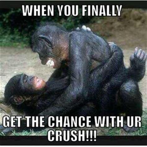 Chimp Meme - chimp jokes kappit