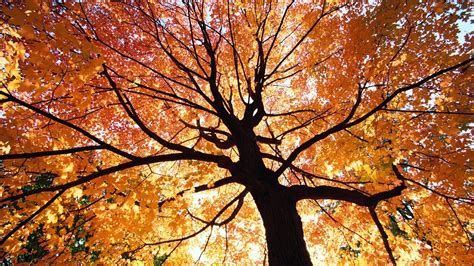 beautiful trees beautiful autumn trees wallpapers http refreshrose