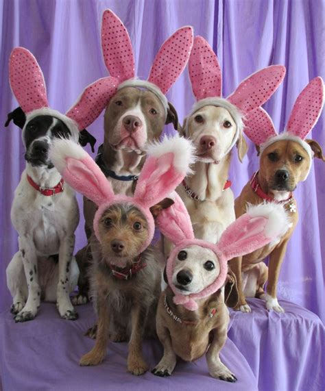 easter breaks with dogs 17 best images about pets and holidays on cats