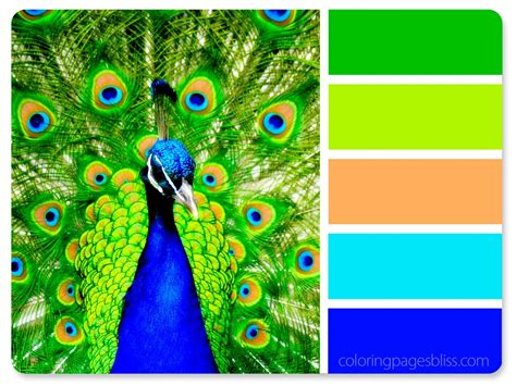 peacock green color nature inspired color palettes
