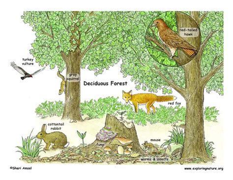 Which Animal Occupies A Rainforest Floor Niche - forest zones clipart clipground