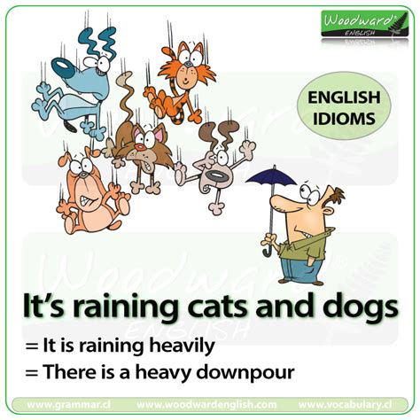 it s raining cats and dogs it s raining cats and dogs