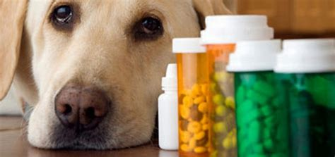 best vitamins for puppies 10 best health supplements for overall health