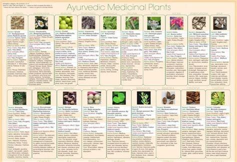 ayurvedic herb chart ayurveda pinterest charts glasses and pictures ayurvedic herb poster text set of 3 ayurveda