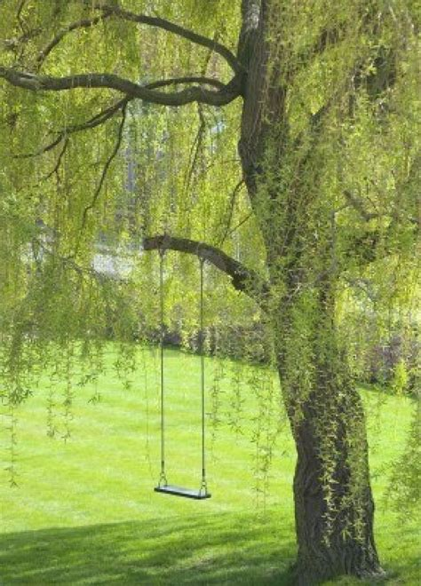 swing for tree branch 25 best ideas about weeping willow on pinterest willow