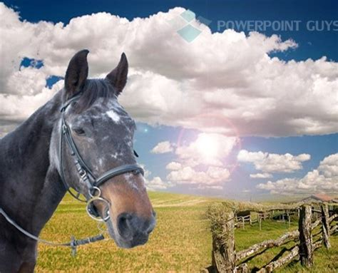 powerpoint themes horse 1000 images about animal powerpoint template on pinterest
