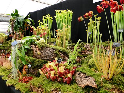Show Plants For Garden How To Survive A Flower Show Wellywoman