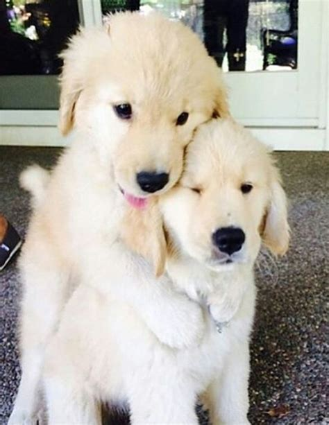 hug puppy puppy hug image 3841974 by marine21 on favim