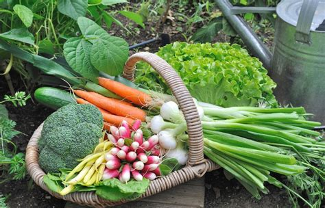 Organic Gardening Vegetables Bury Hill Topsoil And Vegetable Gardening Blogs