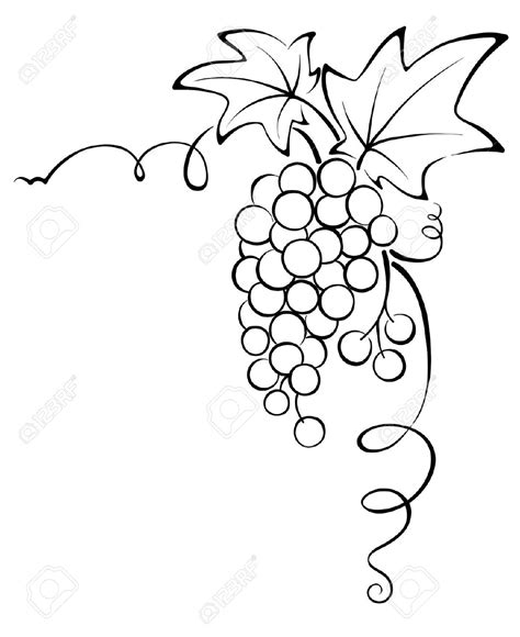 drawn grapes grape leaf pencil and in color drawn grapes drawn fruit grape vine pencil and in color drawn fruit
