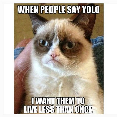 Make Your Own Grumpy Cat Meme - make your own grumpy cat meme 100 images 778 best