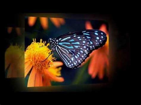 imagenes mariposas y libelulas movimiento fondos de pantalla de mariposas youtube