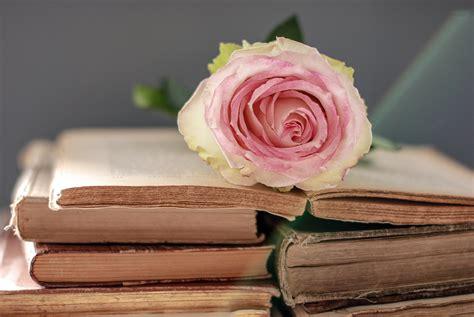 imagenes de rosas sobre libros fondos de pantalla rosas libro rosa color flores descargar