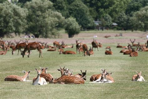 richmond park s best parks and green spaces lastminute