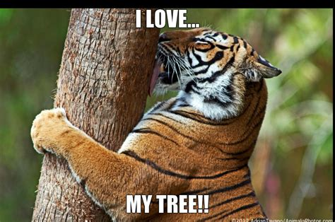 my tree my tree tigers fan 36133639 fanpop