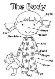preschool coloring pages body parts the body body parts you can print it in a3 format level