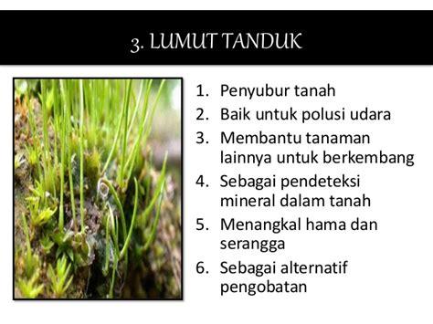 peranan tumbuhan lumut paku  berbiji