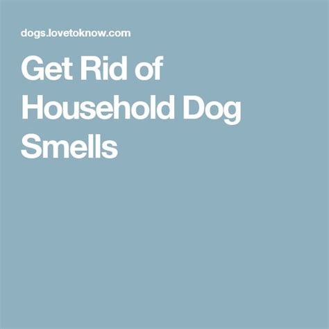 how to get rid of house odors 1000 ideas about dog smells on pinterest dry dog
