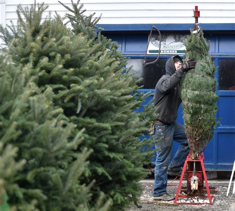 christmas tree farm happy valleyvadelaide tree farmer happy to donate a fresh tree for downtown the portland press herald maine sunday