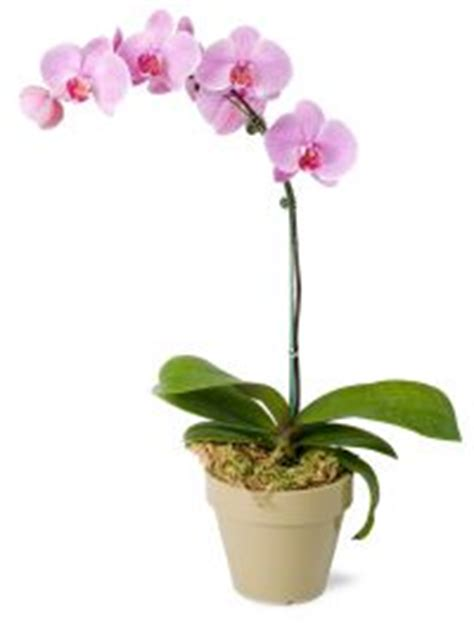 how to take care of an orchid purchased from your florist