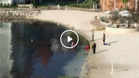 father of toddler killed at disney resort says two alligators were father of toddler killed by alligator at disney world says