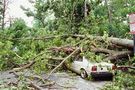 auto insurance when a tree tree falling on a car insurance claims