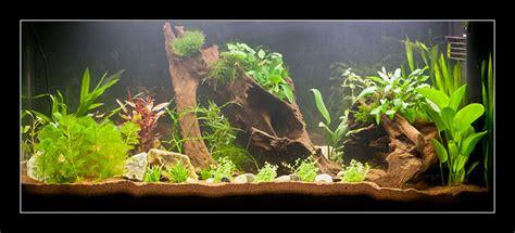 aquarium design eau chaude aquarium eau douce chaude