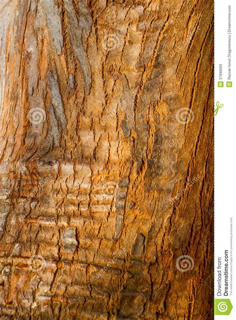 skin the color of bark bark texture stock photos image 37996093