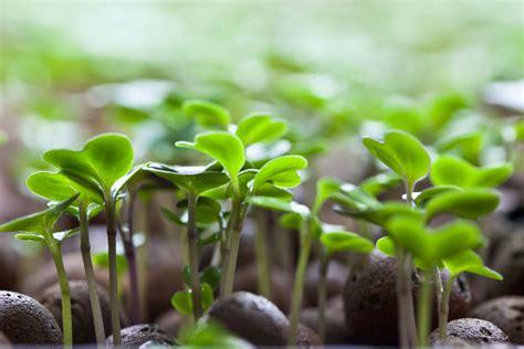Backyard Family Fun Grow Your Own Microgreens Amp Sprouts 187 Freestylefarm