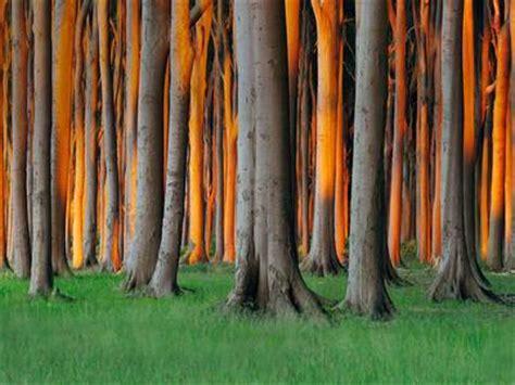 nienhagen wood in mecklenburg vorpommern germany nienhagen wood in mecklenburg vorpommern germany radius