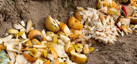 Composting Kitchen Waste At Home by Trench Composting Your Kitchen Waste