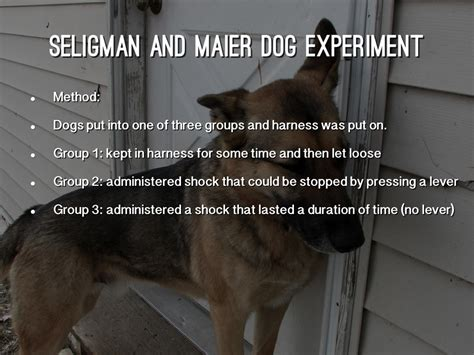 Learned helplessness attribution theory by shelby