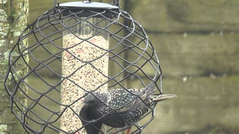 starling proof bird feeder youtube
