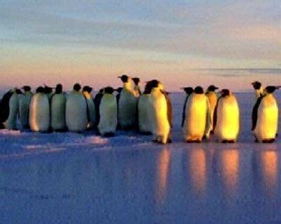 bhagawati prasad semwal, vu3bpz at indian antarctic base
