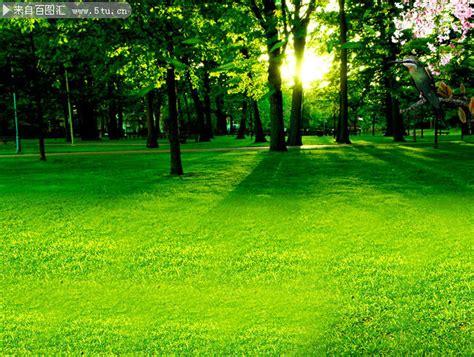 imagenes minimalistas naturaleza 绿色树林风景背景 大自然 百图汇素材网