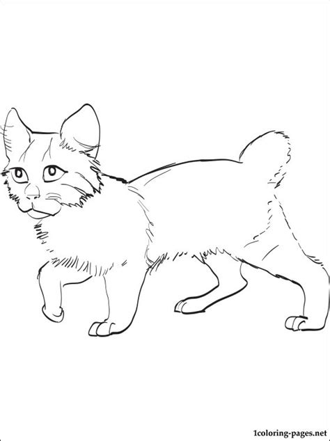 american bobtail cat coloring page coloring pages
