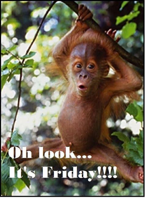 Sexy Monkey Meme - happy friday i like monkeys pinterest daily word