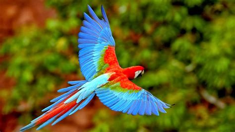 life and entertainment scarlet macaw beautiful parrot