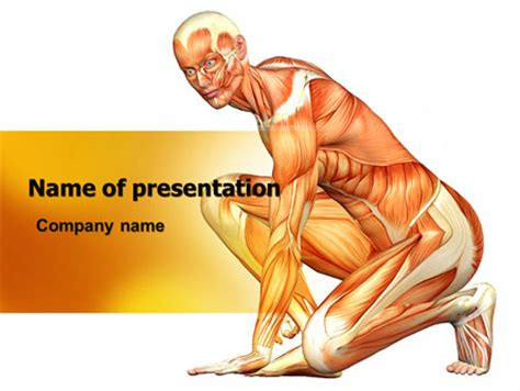 layout body powerpoint muscles of the human body powerpoint template backgrounds