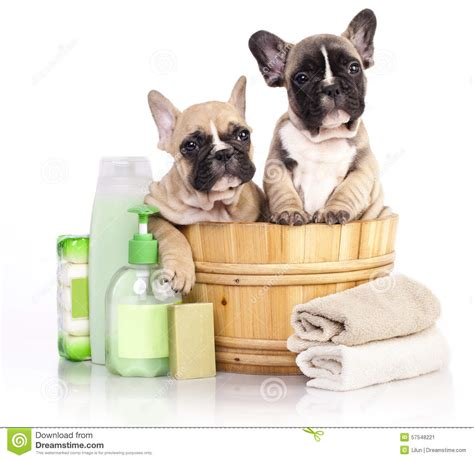 how soon can you bathe a puppy image gallery puppy bath