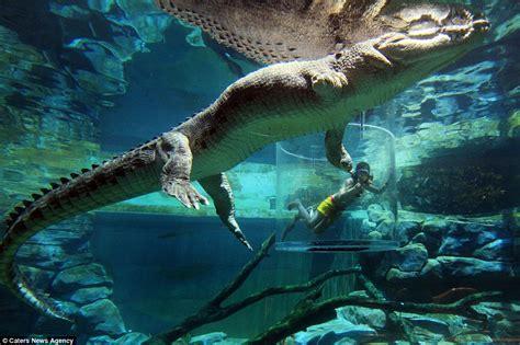 zoologischer garten chicken darwin daredevils brave underwater cage of just