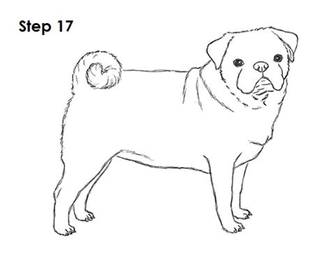 step by step how to draw a pug bah humpug draw pug drawing 10 step color the drawing with crayons i used one brown
