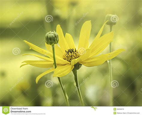 yellow mood yellow mood stock image cartoondealer com 25132243