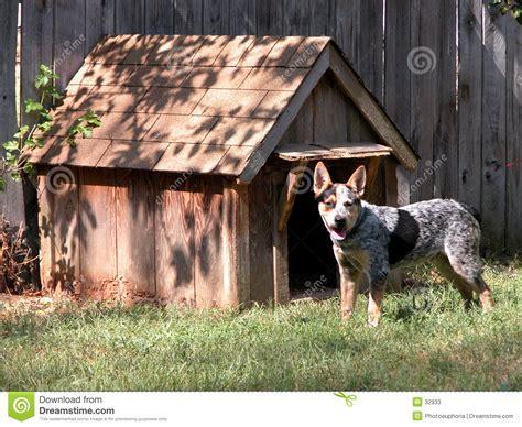 blue dog house blue heeler outside his dog house stock image image of